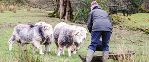 Crookabeck Farm Experiences